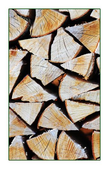 Polttopuu sieni